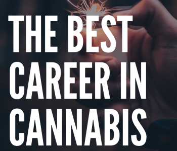 what's the best job in cannabis